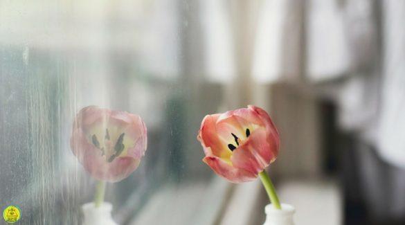 Vuil raam met daarvoor een tulp op een wit vaasje