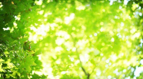 Felle zon die door groene bladeren schijnt - groene tips