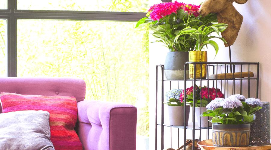 Roze bank met bloemen en planten er naast