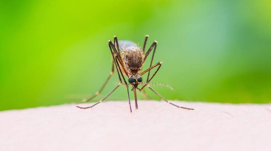 Stekende mug op de huid - 5 Feiten over muggenbeten en wat werkt er nu echt