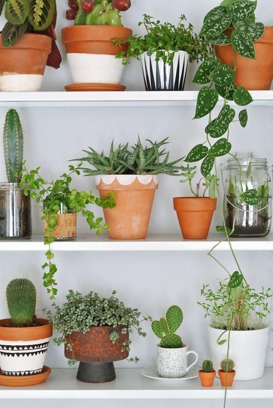 Planken met terracotta potten gevuld met groen - Botanische woonstijl